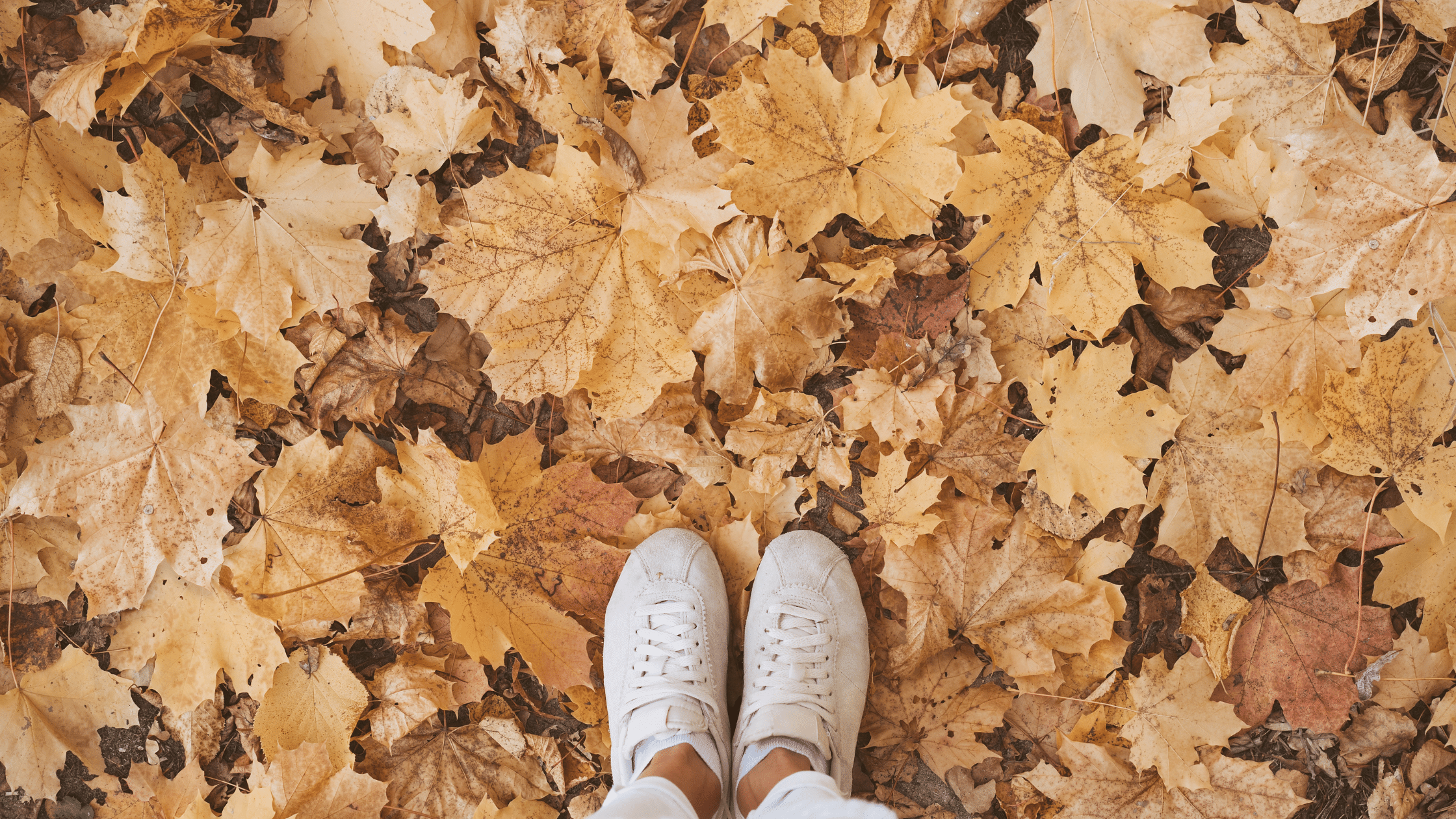 what i love about Autumn